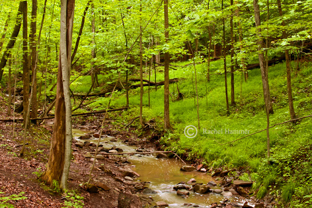 bedford reservation best hikes ohio