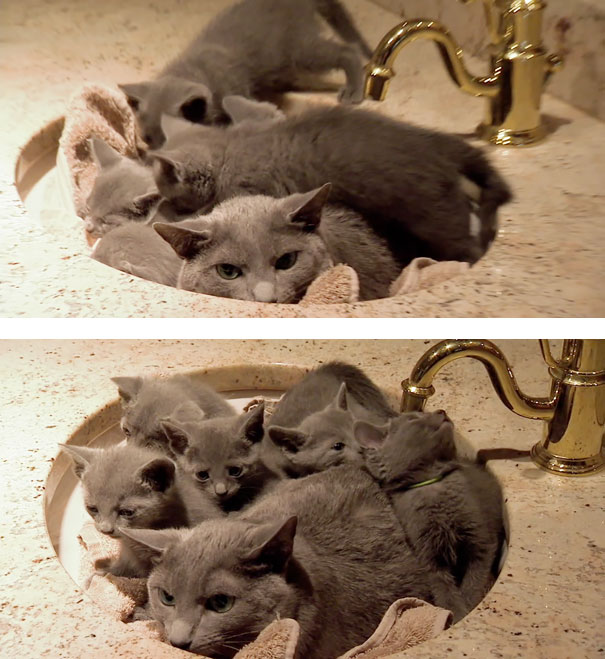 Funny cats - part 212, best cat pictures, cat funny photo, adorable cats
