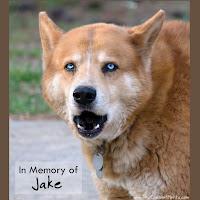 In Memory of Jake The Chesnut Mutt