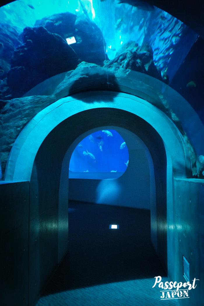 Tunnel sous-marin, aquarium Umi Tamago, Oita