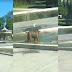 VÍDEO | Perro callejero limpia pileta y recibe elogios en redes sociales