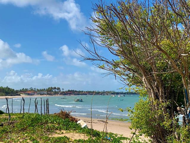 praia com vegetação campestre