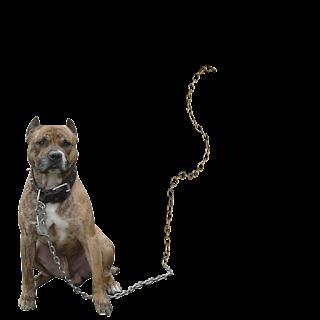 Gangstar boy photoediting dog png