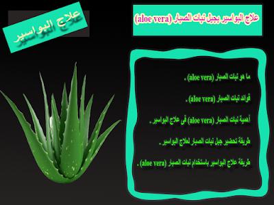 علاج البواسير بجيل نبات الصبار (aloe vera)