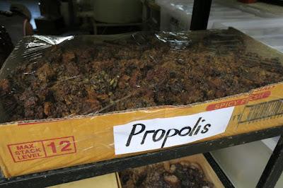 bee propolis manila