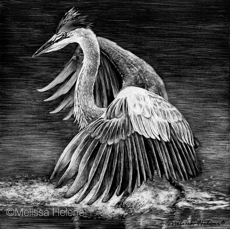 19-Heron-Melissa-Helene-Amazing-Expressions-in-Scratchboard-Animal-Portraits-www-designstack-co