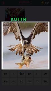 большая птица своими когтями в полете держит рыбу пойманную