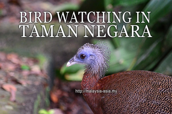 Taman Negara Bird Watching
