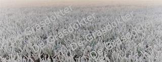 gazon winterklaar maken