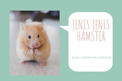 Jenis Jenis Hamster