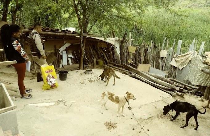 Piritiba: 24ª CIPM prende indivíduo por maus-tratos a animais e posse ilegal de armas de fogo