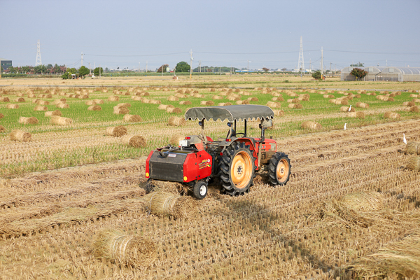 嘉義民雄田間稻草捲好可愛,農村季節限定景觀,充滿異國風情