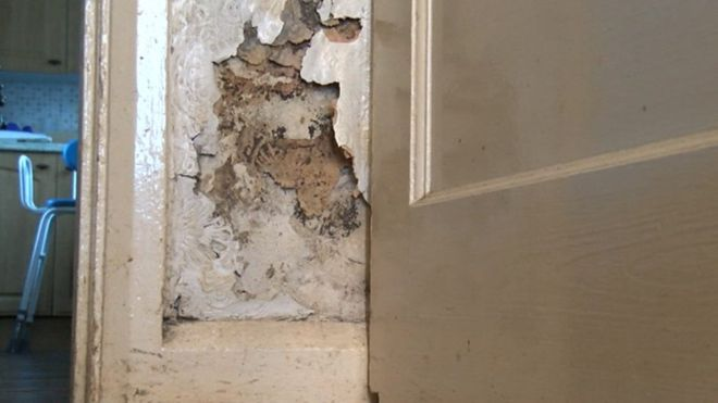 Mold InspectionFor Black Mold