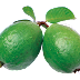 পেয়ারা খেলে কি উপকার পাওয়া যায় / Guava benefits in Bengali | Ayurvedic-Care |