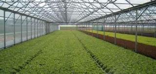 ماهي :: أهمية الزراعة في الوطن العربي