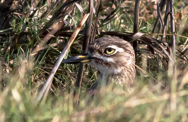 Water Thick Knee Table Bay Nature Reserve Woodbridge Island Vernon Chalmers Photography Copyright