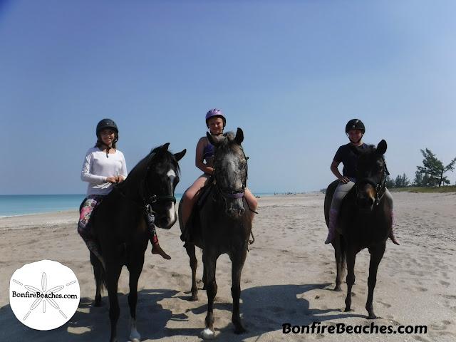 Horses On The Beach Day
