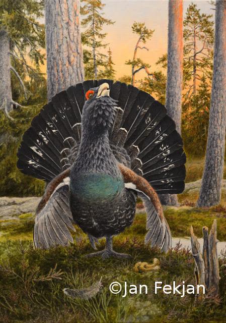 Bilde av motivet 'Trolltiur' som digigrati. Digitalt trykk laget på bakgrunn av maleri av storfugl hann (Tetrao urogallus). Hovedmotivet er en tiur i spill, med hevet hode og blikkontakt med betrakteren. Halen står som en vifte bak hodet. Tiuren står i et åpent skogslandskap med bartrær i bakgrunnen. Bildet er i høydeformat.