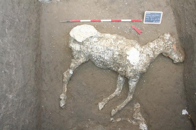 Second buried horse, post-Vesuvius tile grave found at Pompeii