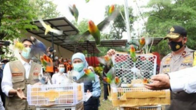 Lepas Burung Lovebird ke Alam Liar, Gubernur Khofifah Tuai Kritikan