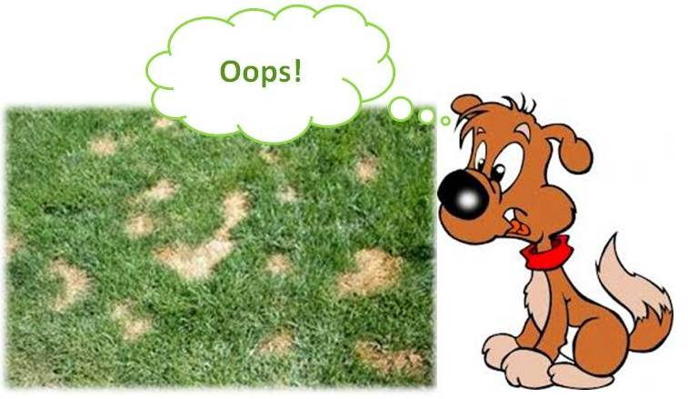 Diy Stop Dog Urine Spots Burns On Lawn Gr Plants Natural Prevention