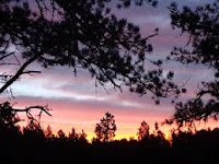 Treestand Sunrises  Outdoors