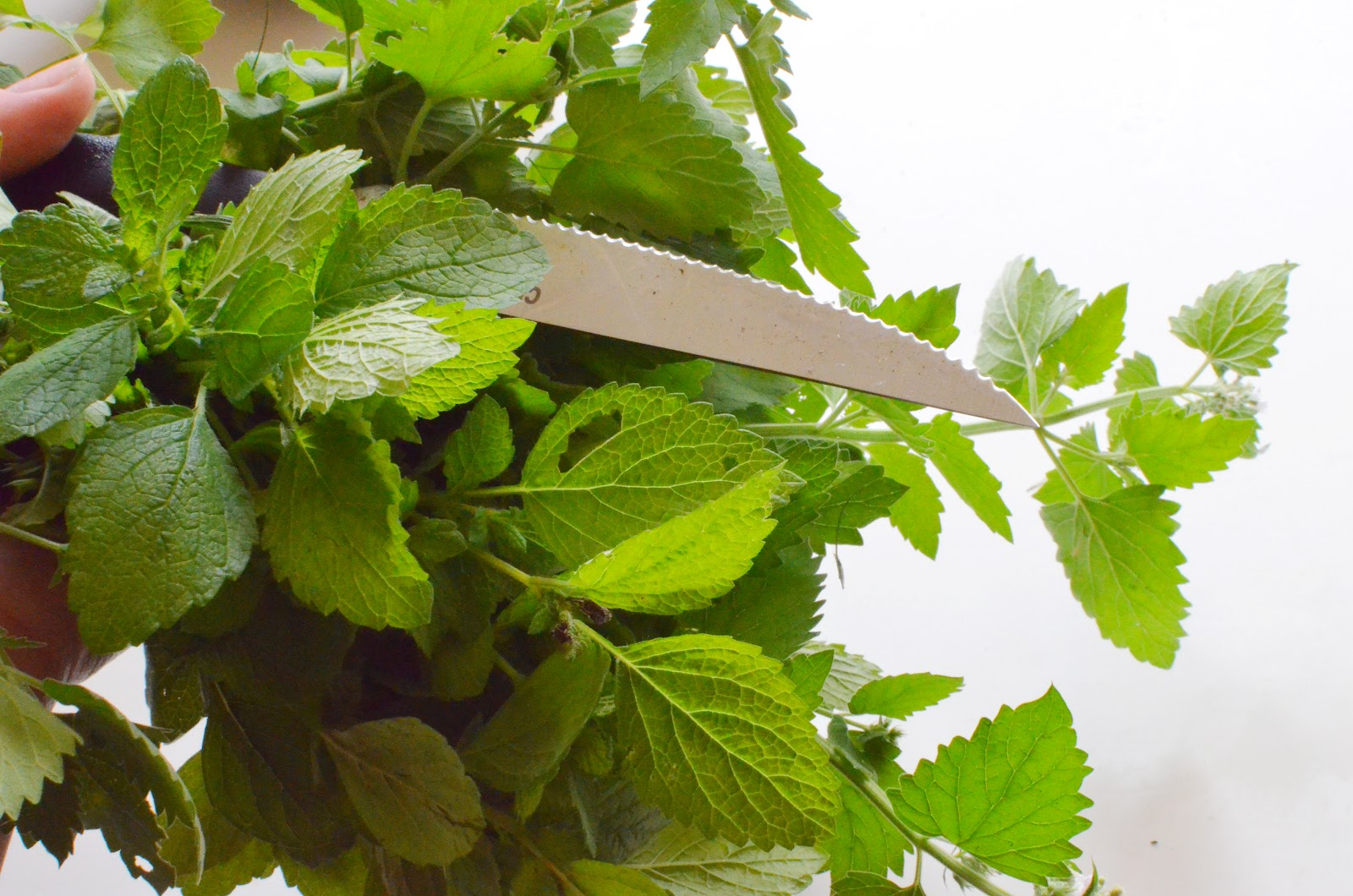 How to Brew Herbal Teas with Lemon Balm