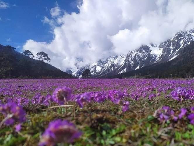 Yumthang valley and Zero Point Tour | North Sikkim Tour