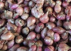 bawang-goreng-renyah-yang-mendunia