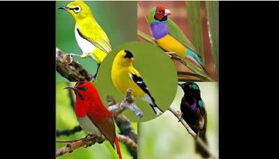 Komunitas Olx Toko/Kios Pasar Jual Beli Burung Khas Lomba Balikpapan City Karantina East Kalimantan