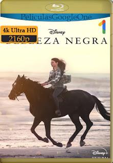 Belleza Negra (Black Beauty) (2020) [4k WEB-DL HDR] [Latino-Inglés] [LaPipiotaHD]