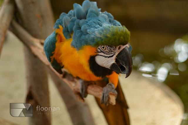 Papugi w Market Dome w Center Parcs Bispinger Heide.