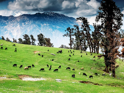 Chopta meadows
