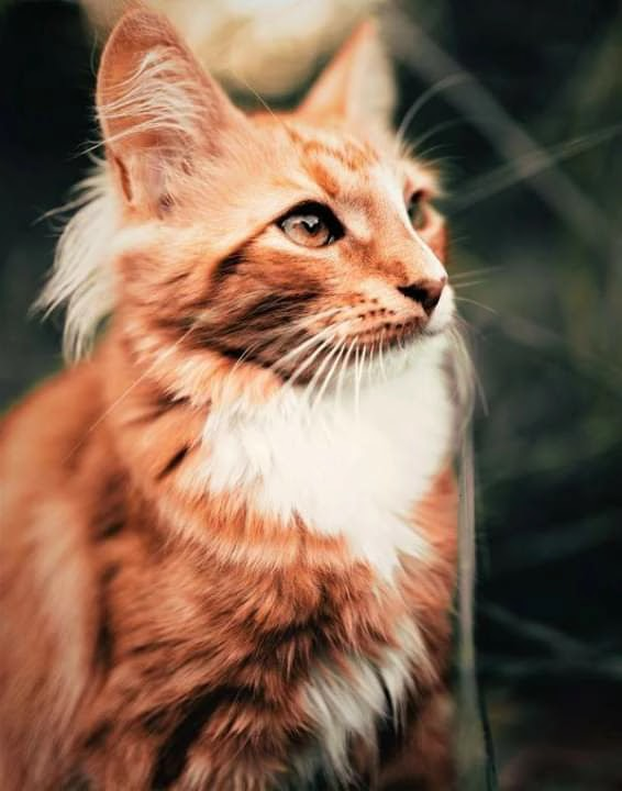 See the coolest beautiful cat pictures of 2020 only from here