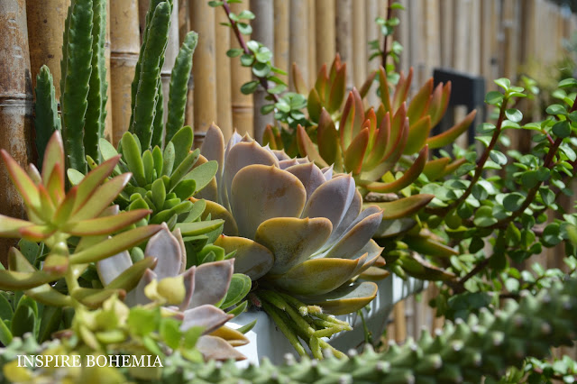 Cactus and Succulent Rain Gutter Fence Planters by Inspire Bohemia - Miami/Ft. Lauderdale - drought tolerant plants - suspended hanging planters
