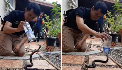 Menangkap ular kobra dengan botol