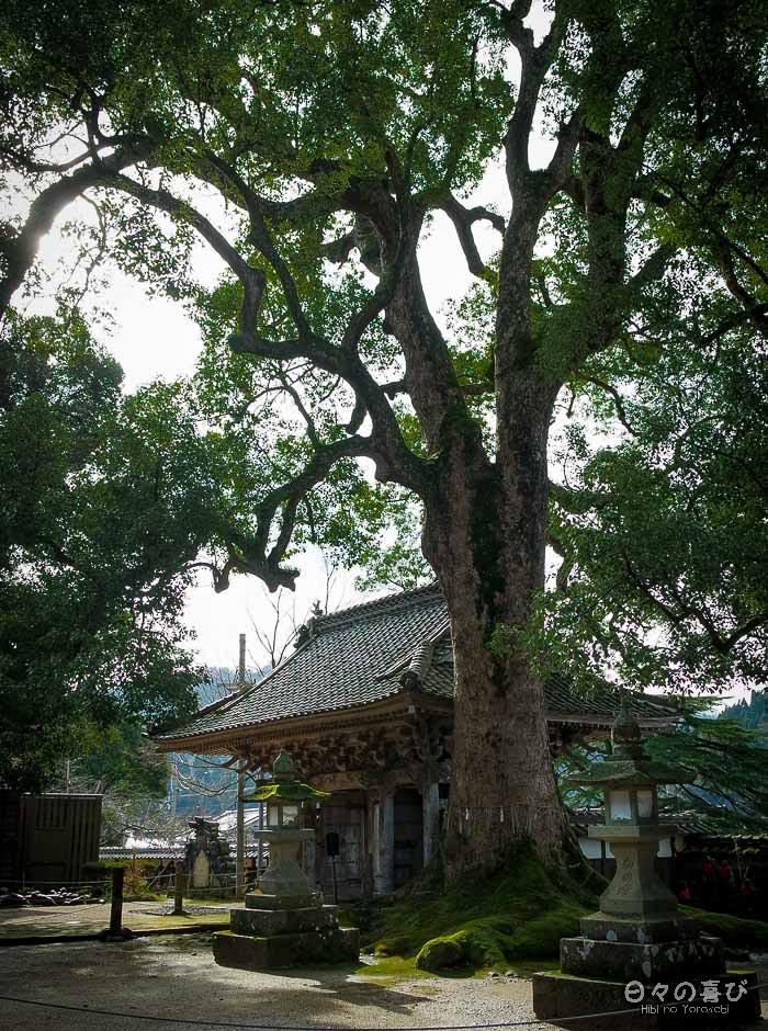 arbre sacré temple daijoji contreplongée