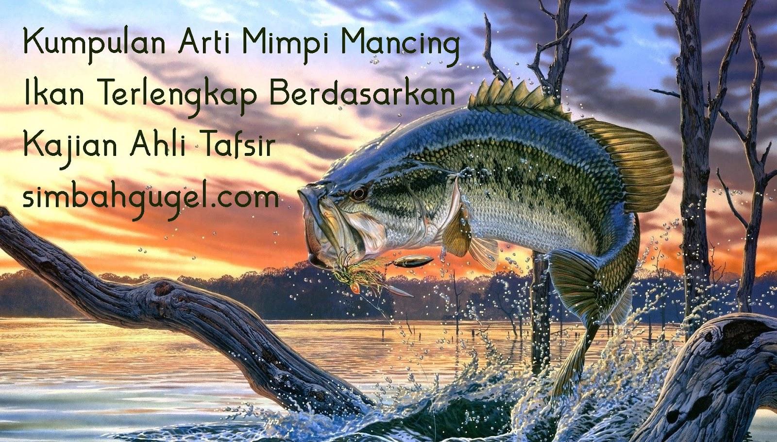 Unduh 420 Gambar Ikan Gabus Erek Erek HD Terbaru