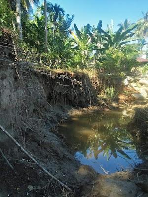 Tanah dan Tanaman Milik Warga Amblas ke Sungai,Tanggul Ambruk