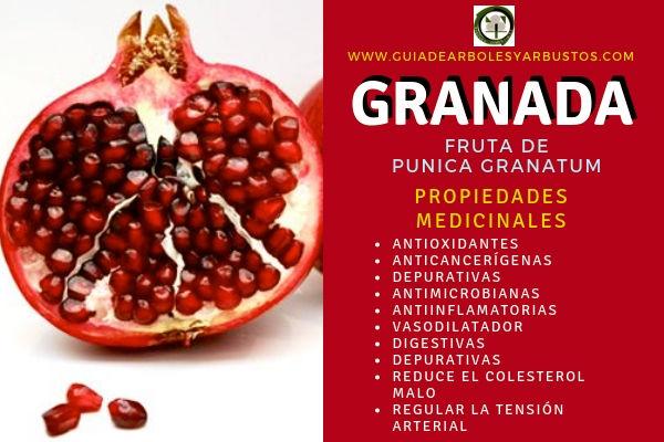 La Granada tiene Propiedades Medicinales Antioxidantes, Anticancerígenas, Depurativas