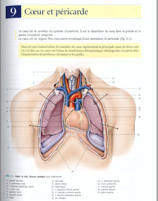 Télécharger Livre Gratuit ANATOMIE - Thorax - Coeur et péricarde pdf
