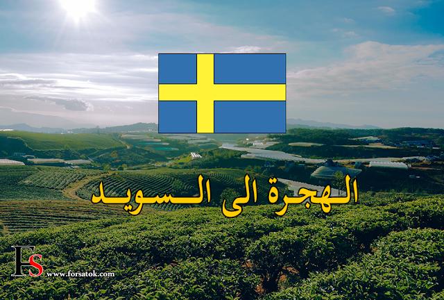 إليك كيفية الهجرة الى السويد قانونيا و العمل في السويد بطريقة مجانية ومضمونة
