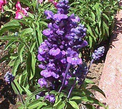14 plantas resistentes ao sol