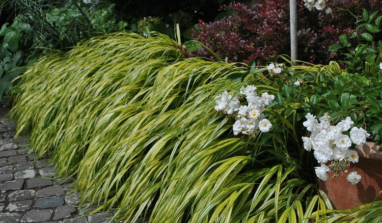 Dekorative Pflanzen - Impressionen aus privaten Gärten