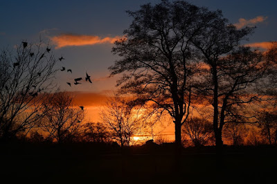 Aves que revuelan el anaranjado atardecer.