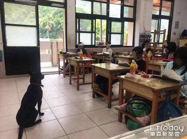 """Chú chó hoang chui vào lớp """"giám sát"""" học sinh"""