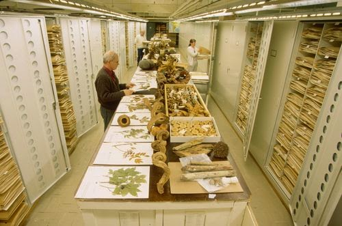 Herbarium management