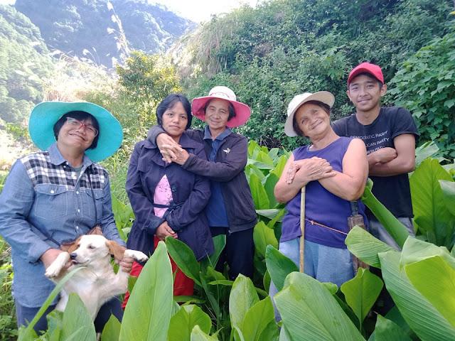 Turmeric farm in Mountain Province