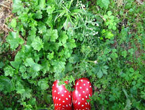 Simple Living Toowoomba ~ Identifying Weeds Workshop ~ 9th October