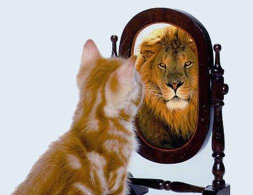 Gato frente a espejo se transforma en león